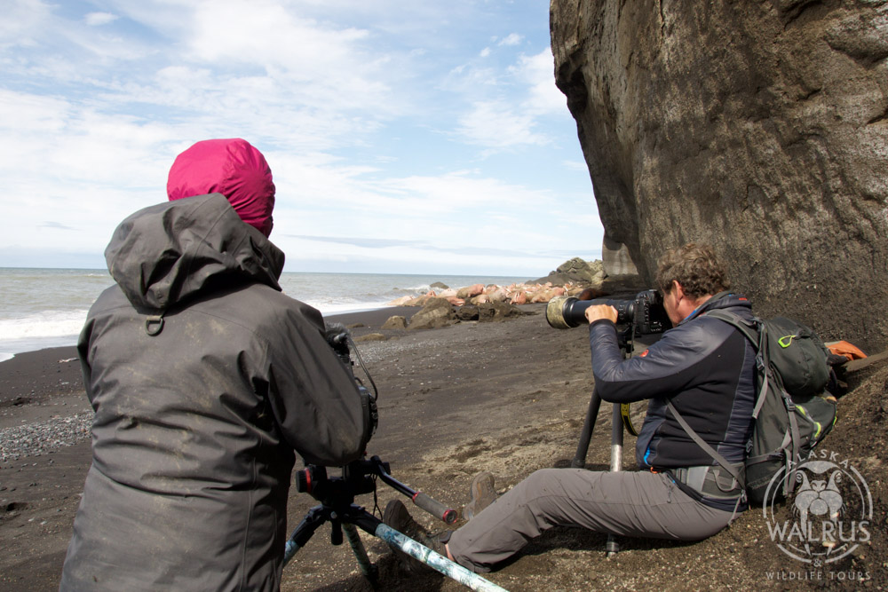 Alaska walrus tours