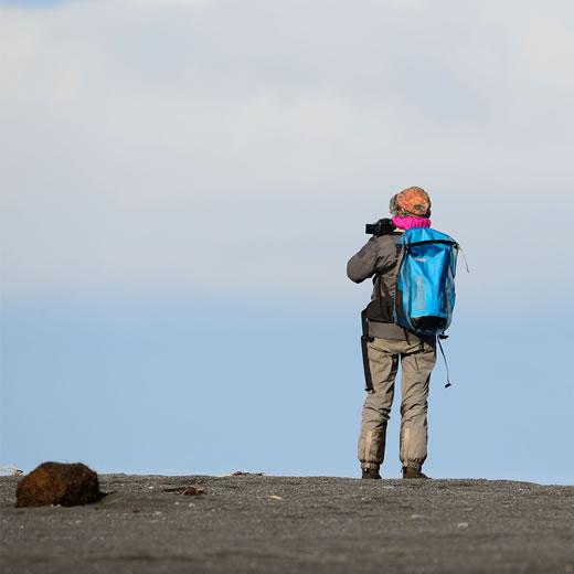 Alaska walrus viewing