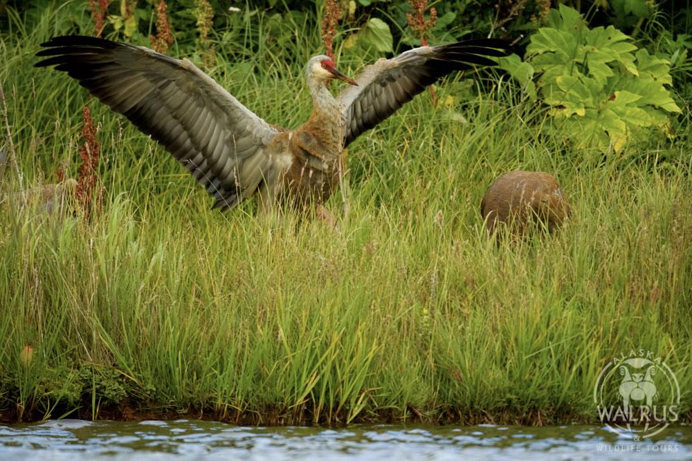 wildlife film